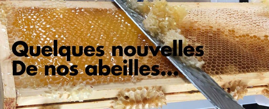 DES NOUVELLES DE NOS ABEILLES !