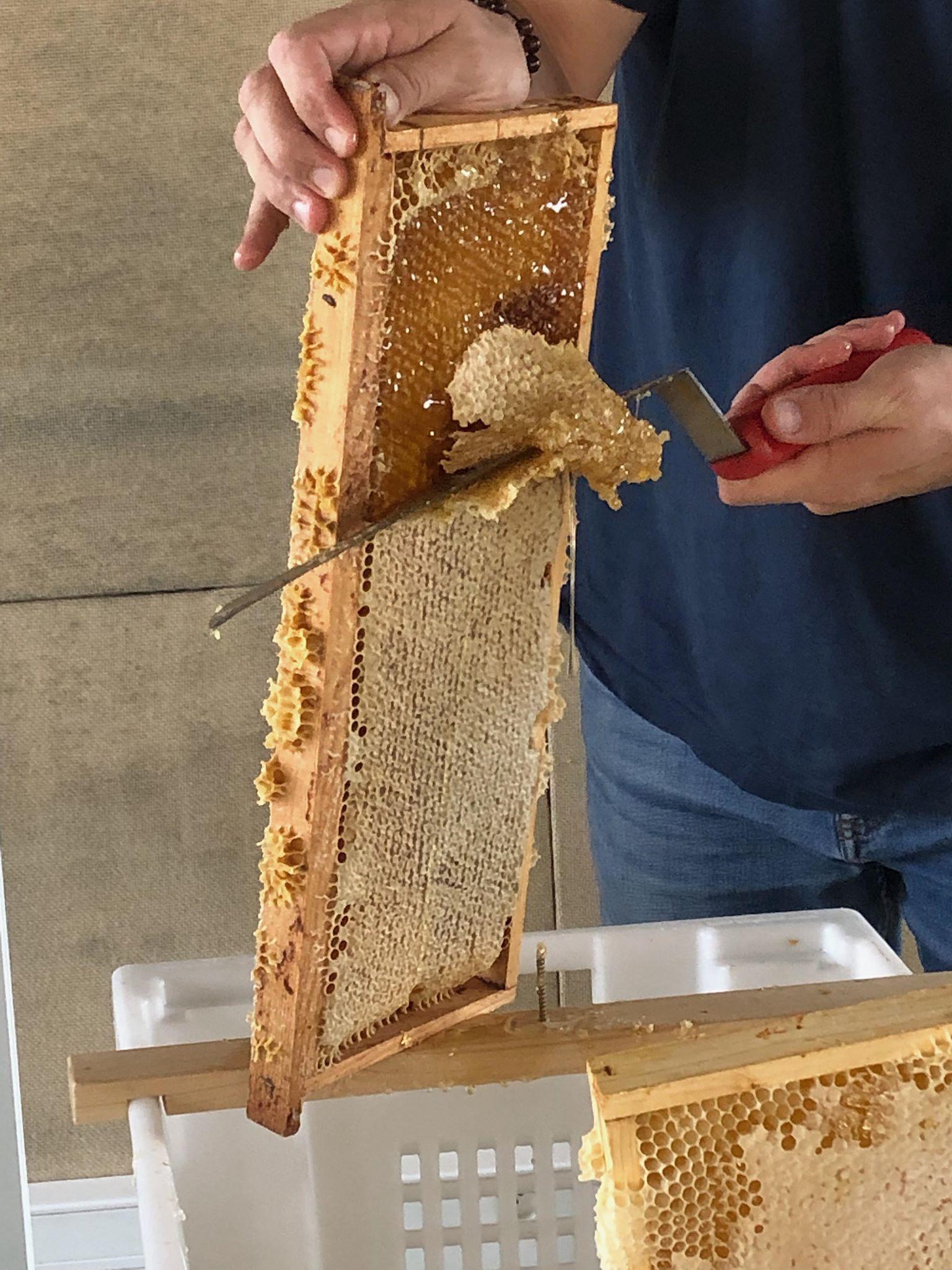Les ruches sur le toit